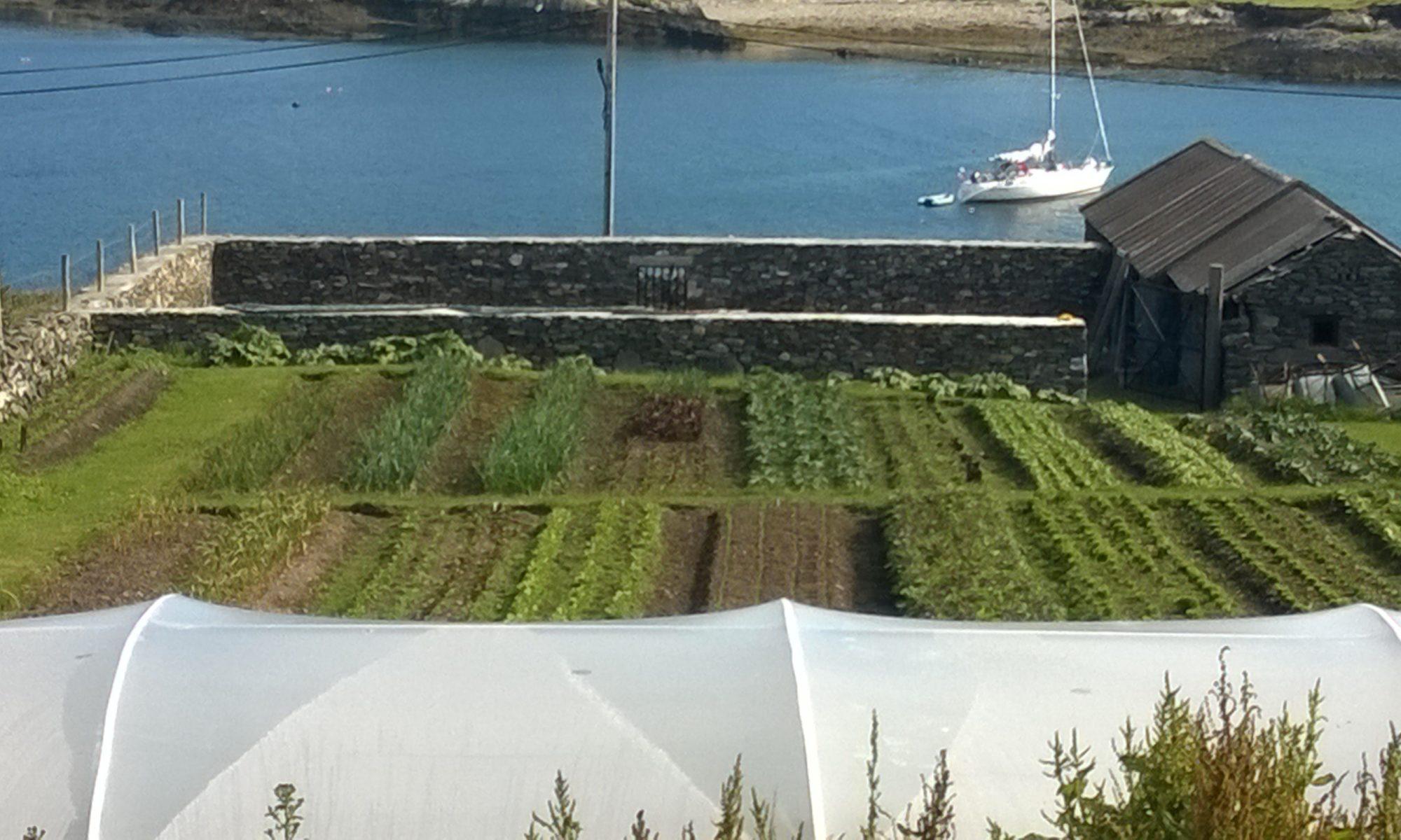 Lacey's  Farm• Inishbofin